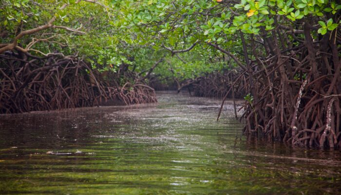 Keep it in the ground – mangrove carbon, that is